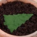 Kartka świąteczna z nasionami świerka pospolitego FS1041